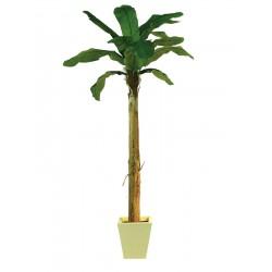 Drzewo bananowe 270 cm