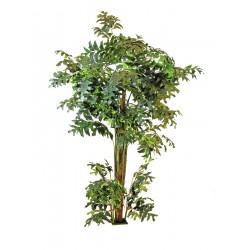 Palma orzechowa 305 cm