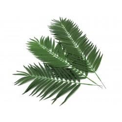 Gałęzie palmy kokosowej 80 cm 12 szt.