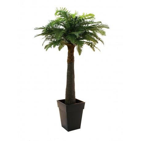 Palma paprociowa 180 cm